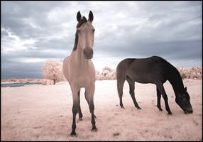 Horses Dream II... by MichiLauke