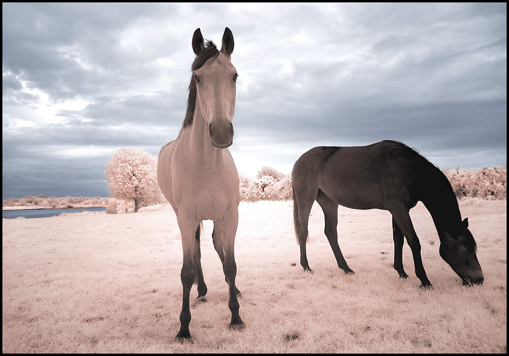Horses Dream II... by MichiLauke