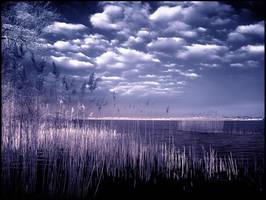 Baltic Sea infrared... by MichiLauke
