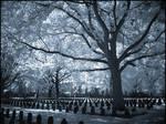 Soldiers Graveyard...