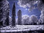 Roses Graveyard infrared...