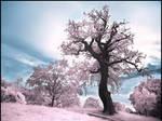 Magic Tree infrared...