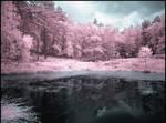 Forrest Lake...
