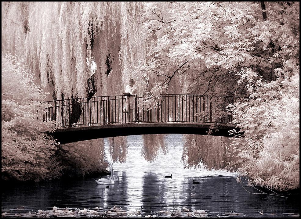 Idyllic Bridge infrared... by MichiLauke