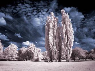 Cottonwood Trees infrared... by MichiLauke