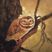 Owl sketch on acrylics