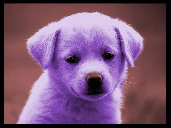Purple puppy by Jaribo on DeviantArt   600 x 450 jpeg 50kB