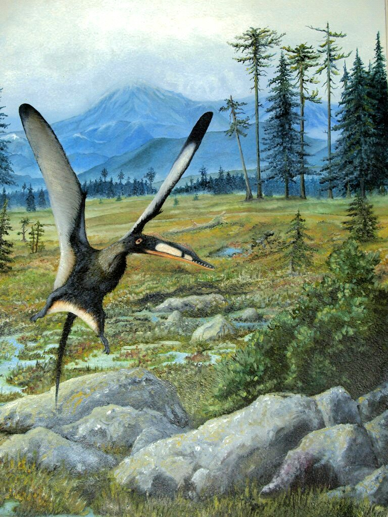 Darwinopterus linglongtaensis by Antresoll