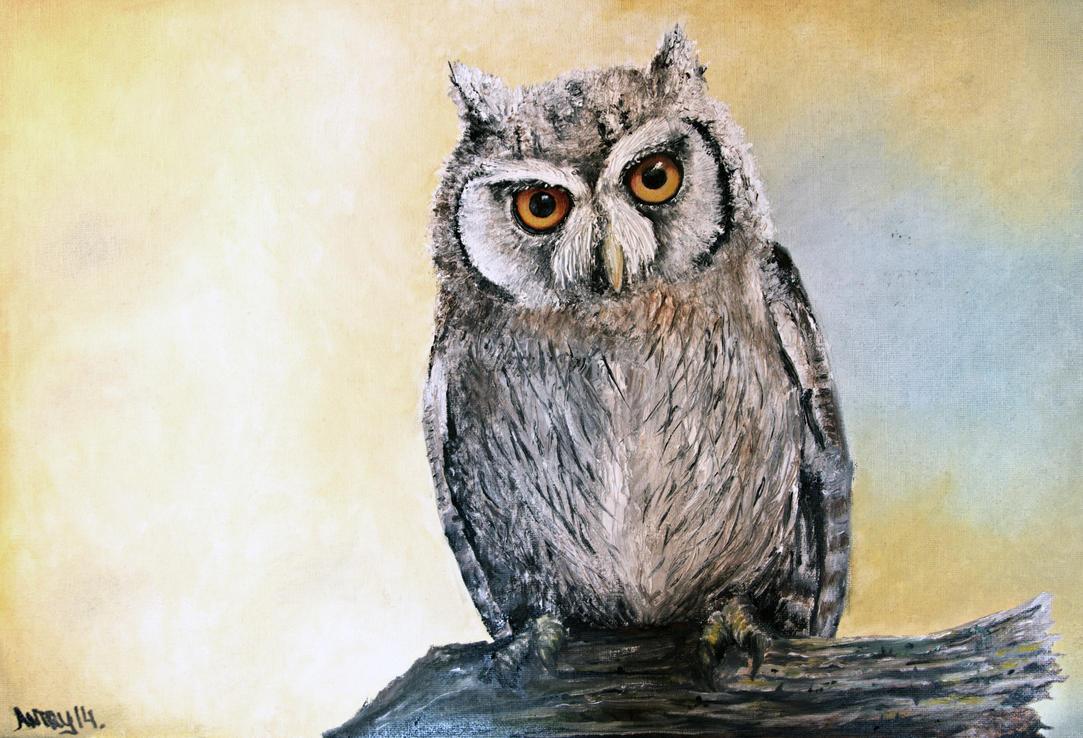Northern white-faced owl (Ptilopsis leucotis) by Antresoll