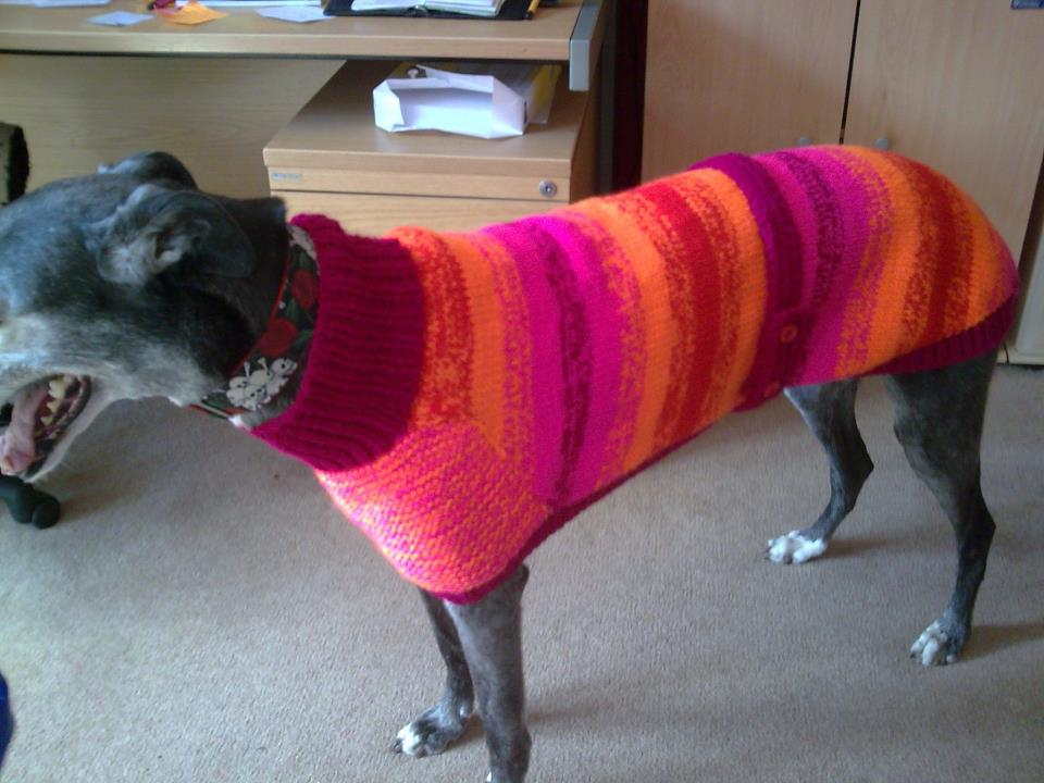Knitting Patterns For Greyhound Dogs : Knitted Greyhound Coat by greyhounds4me on DeviantArt
