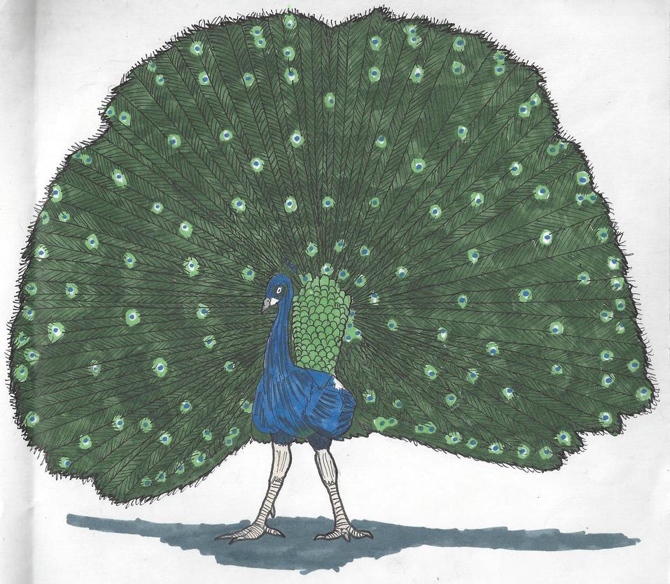 peacock_by_dwestmoore-dc4zkr8.jpg