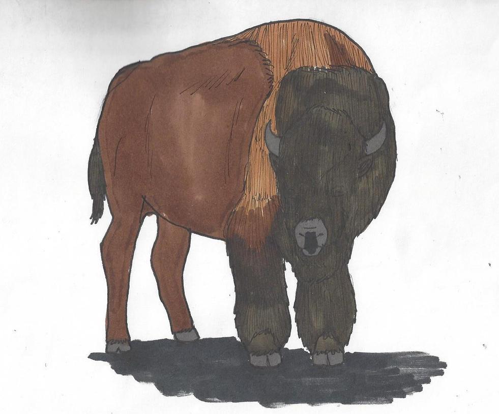 bison_by_dwestmoore-dc7itp4.jpg