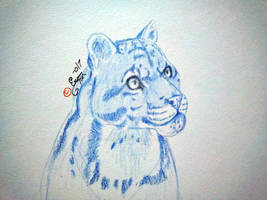 Clouded Leopard: colored pencil