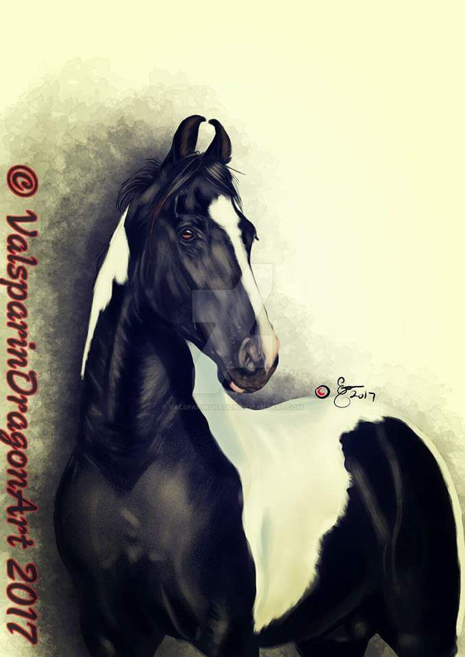 Marwari Horse By Valsparindragon On Deviantart