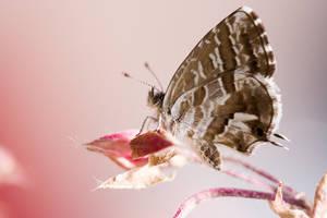 butterfly by Bizzio