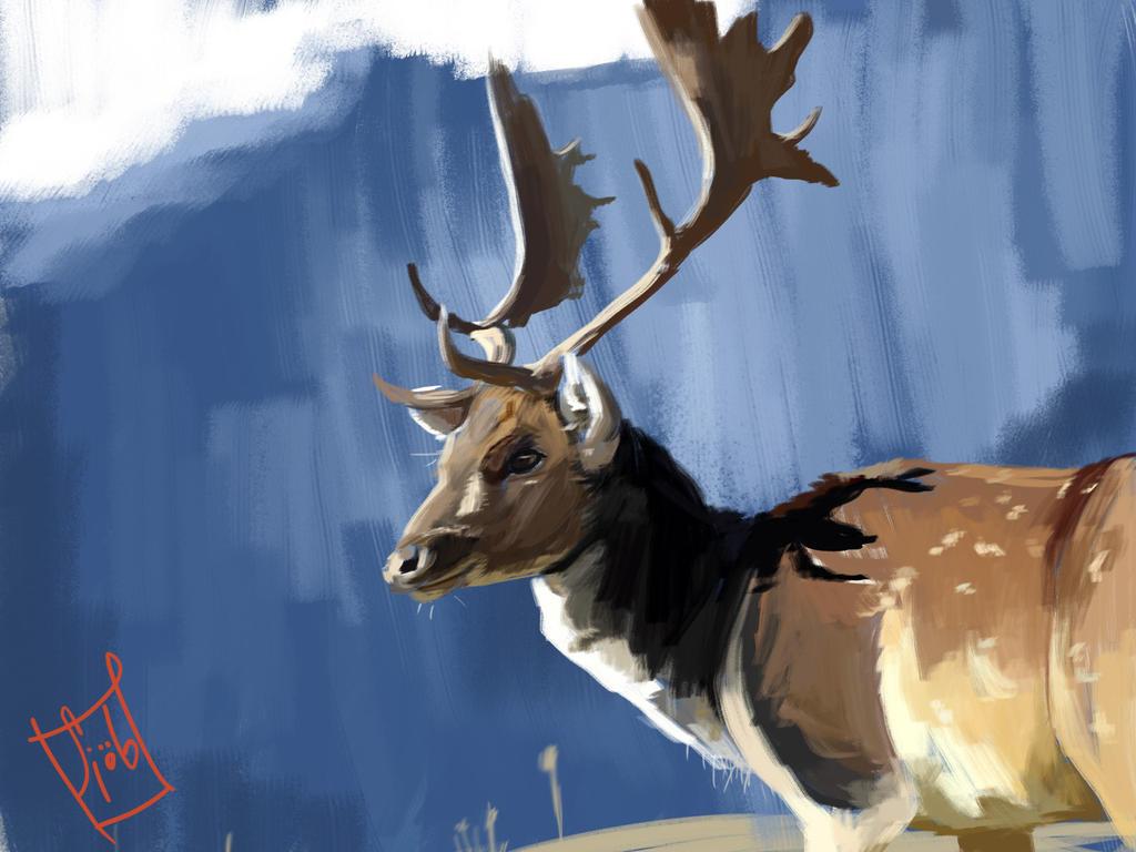Fallow Deer by Sjob