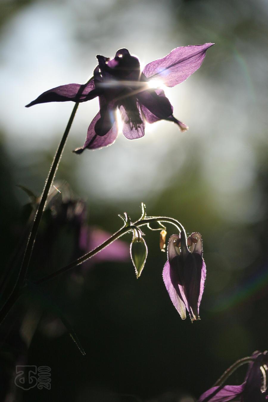 fragile by Spinewinder