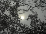 Gray Veil