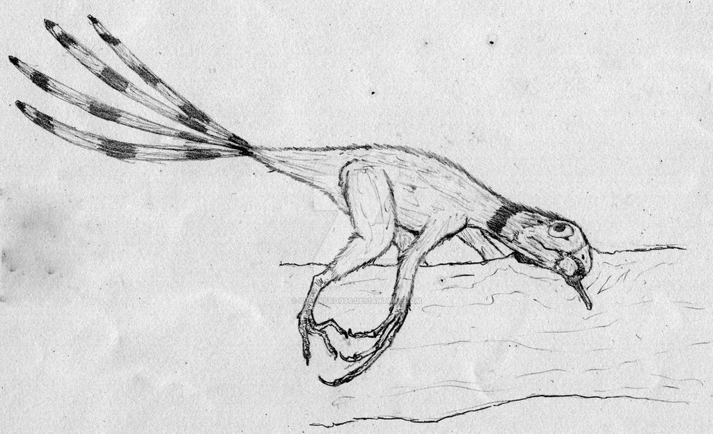 Epidexipteryx hui by blackfrog96