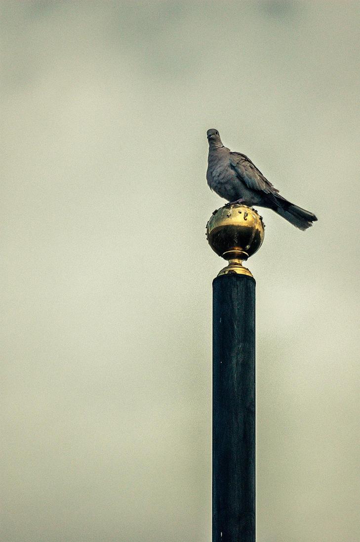 Over the golden globe by rosmar71
