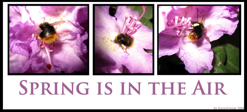 spring the air f2 - photo #28