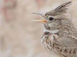 Close up for bird head by ramzykeko