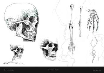 Skeleton Study by darpan-aero