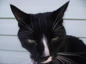 demon cat by avvelenatore