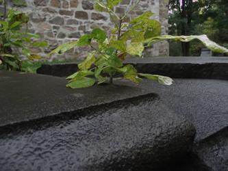 One live in the stone by avvelenatore