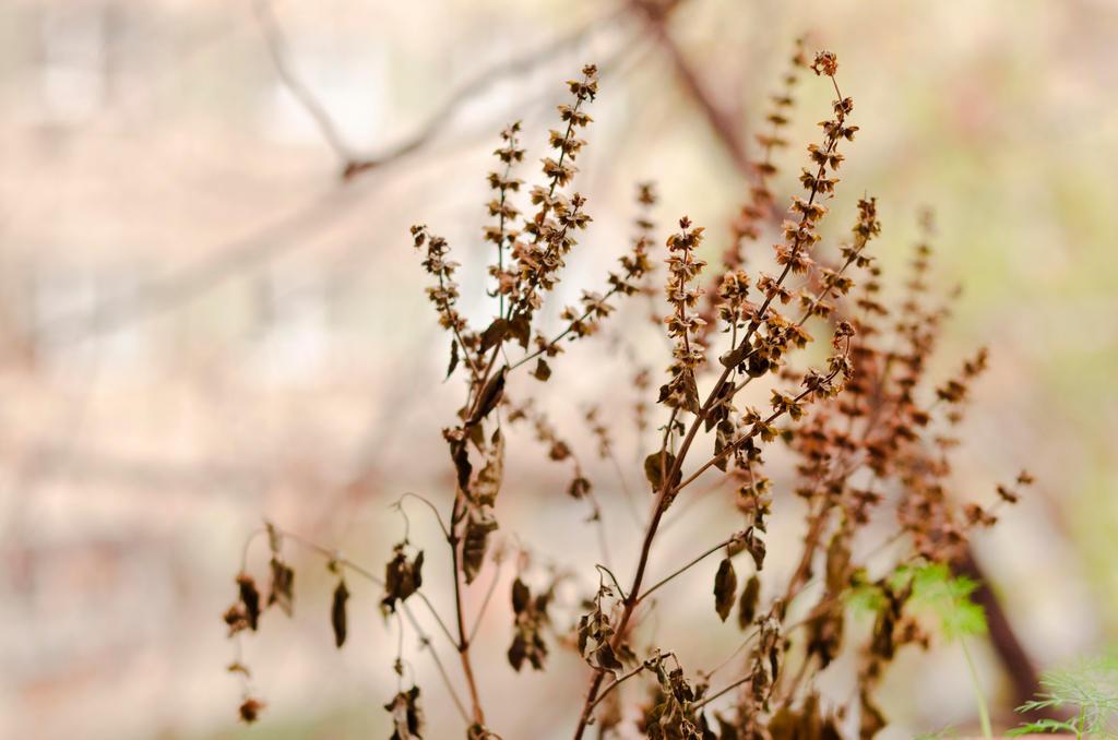 Serenity by bluvera