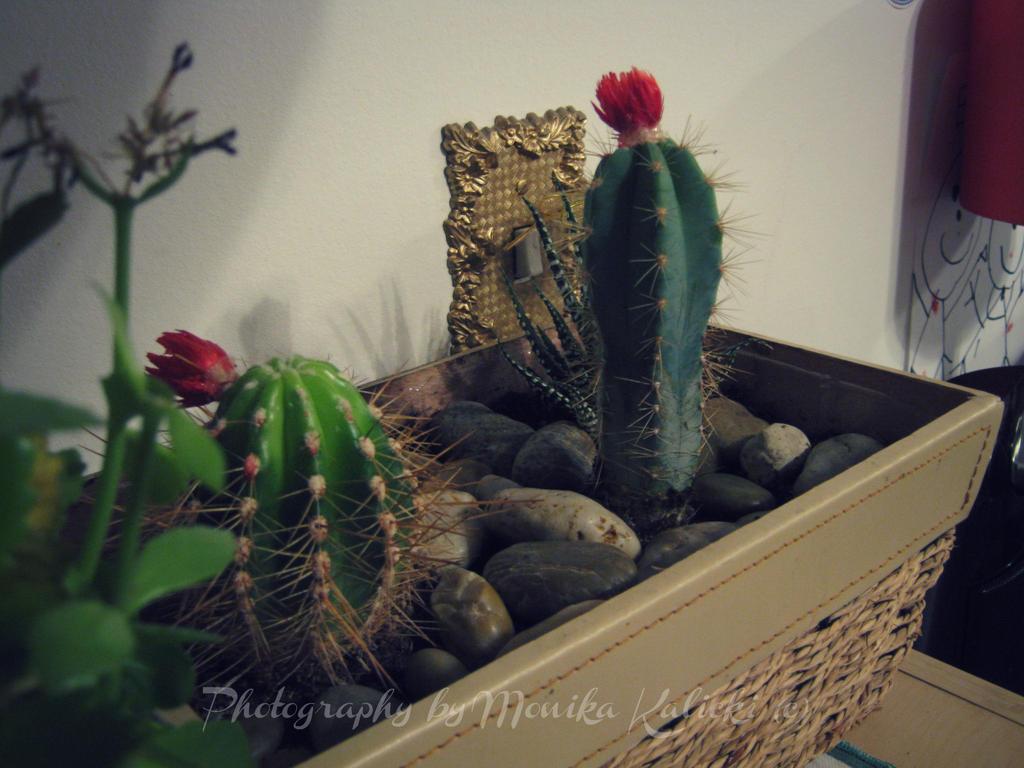Cactus by aBookReadersLife