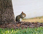 Squirrel time (2)