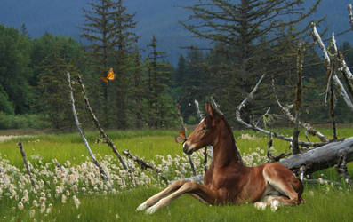 .:Spring:. by Cowgirl867