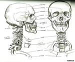 ~Skull Structure~