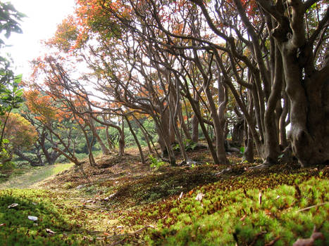 Japanese Forest 2