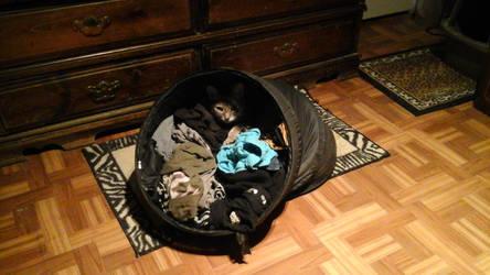 Where he Sleeps by Growlie26