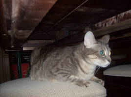 Hideaway kitty by Growlie26