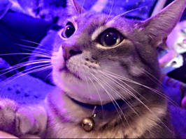 Purple majesty by Growlie26