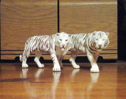 A tale of two white tigers by Growlie26