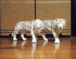 A tale of two white tigers