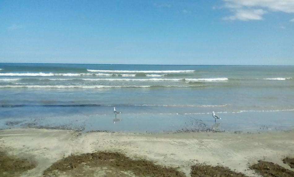 Seagulls by Growlie26