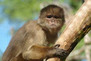 Monkey magic by piczeels