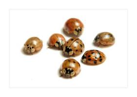 Ladybugs by nico-blue