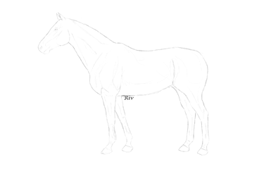 F2U Thoroughbred lineart by VShorses