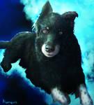 Doggo Portrait