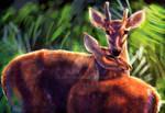 Deer Fun