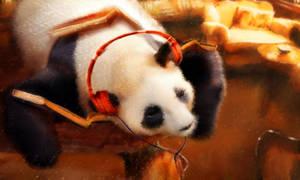 Study Panda