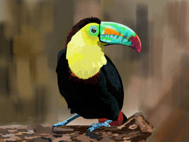 Beautiful Toucan by yavni