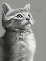 Oliver by GabrielleBrickey
