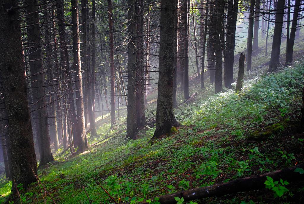 Foggy Forest II by FillyDan